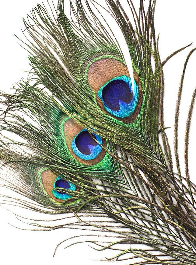 FENG SHUI PEACOCK FEATHER 10-12 inch LONG